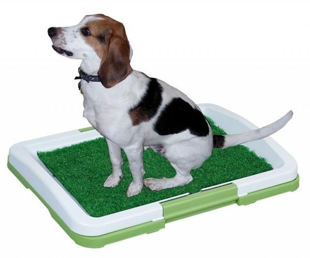 Domácí psí toaleta - Potty Pad